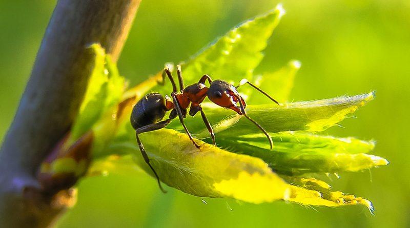 Ameisen im Haus und Garten