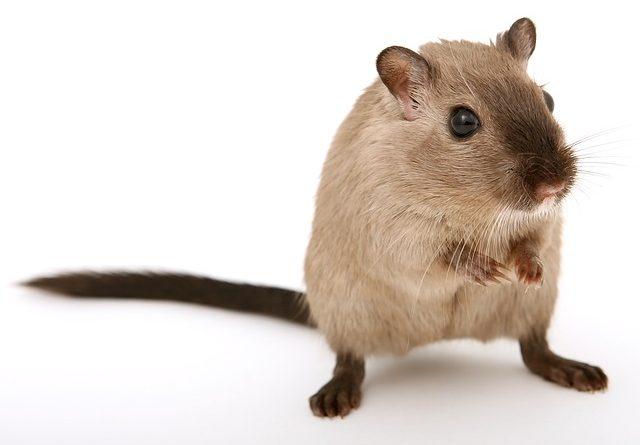Ungeziefer – Mäuse