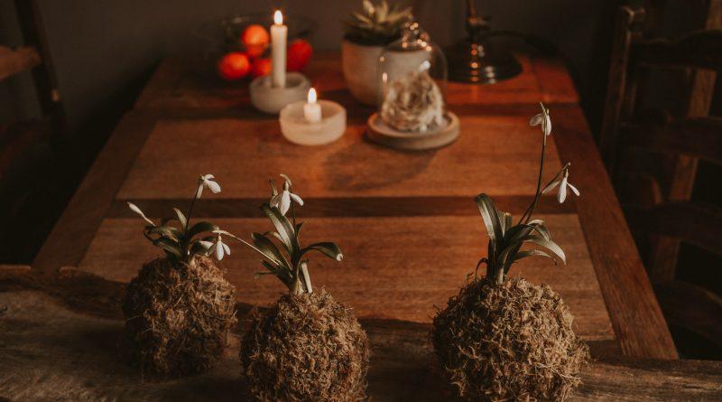 Kokedama – Pflanzenzauber ohne Topf