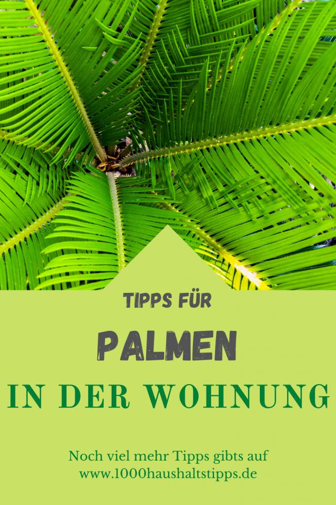 Palmen für die Wohnung
