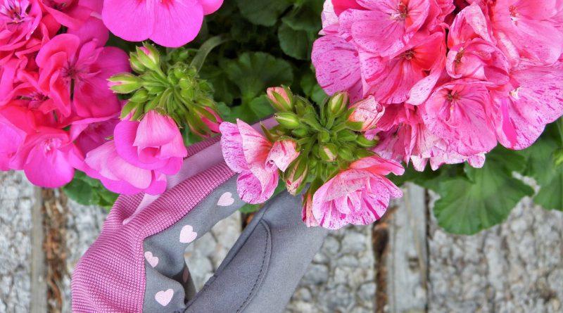 SOS-Hausmittel für Balkonpflanzen