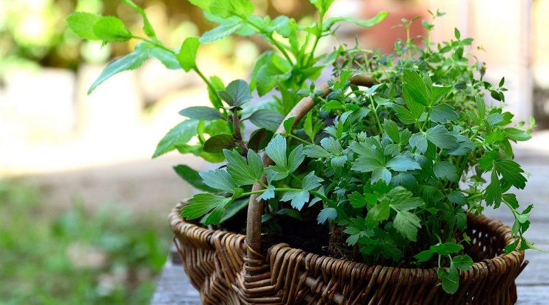 Die Vorzüge von Gartenarbeit