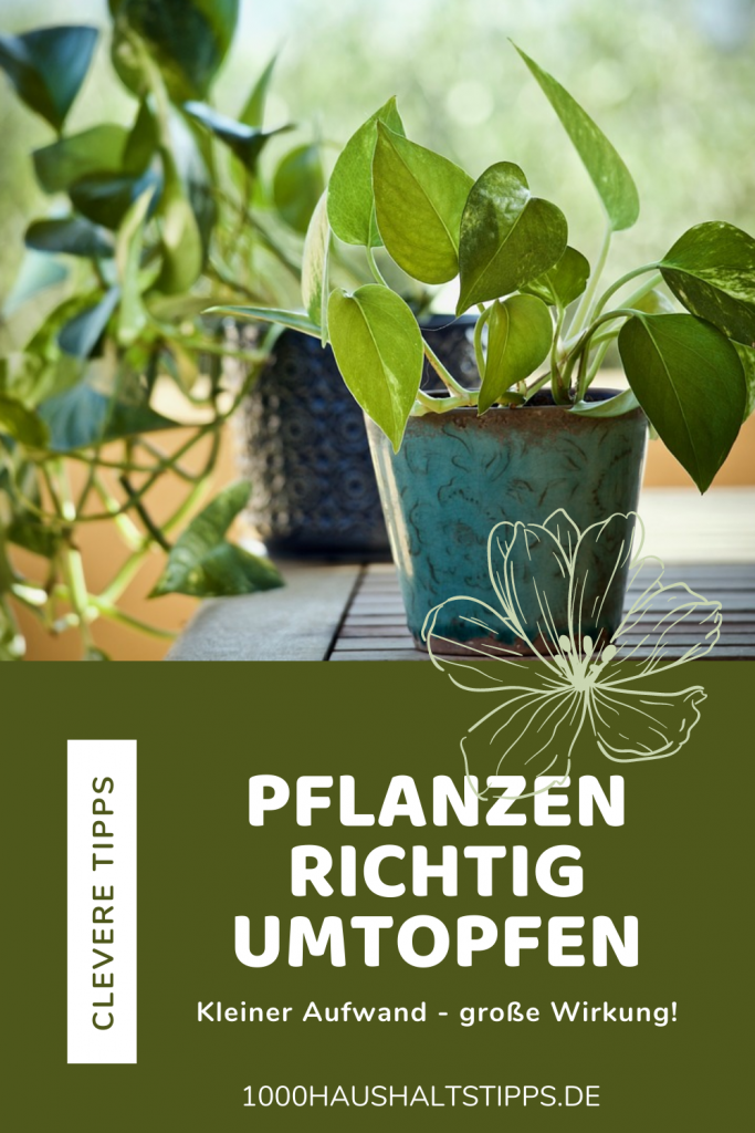 Pflanzen richtig umtopfen