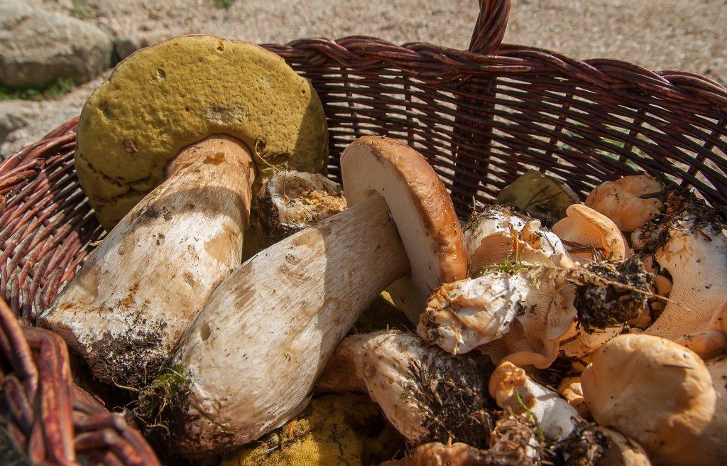 Pilze, Speisepilze